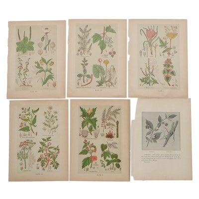 """Color Lithographs from Henry Monsun's """"The Book of Health,"""" Mid-20th Century"""