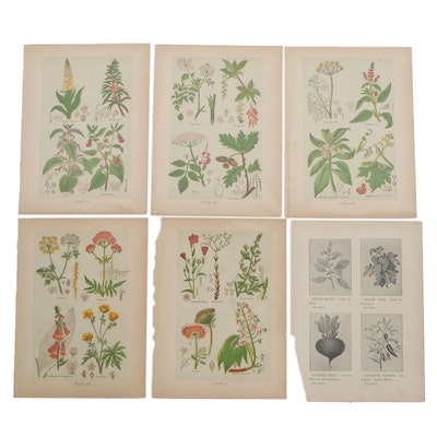 """Color Lithographs from Henry Monsun's """"The Book of Health,"""" circa 1900"""