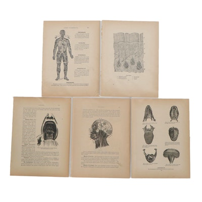 Lithograph of Medical Illustrations, Early 20th Century