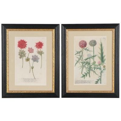 Botanical Hand-Colored Etchings after Johann Weinmann, 19th Century