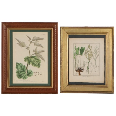 Botanical Hand-Colored Engravings Including Philip Miller, 18th to 19th Century