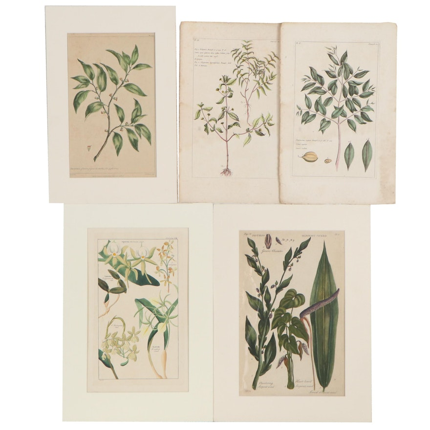 Hand-Colored Engravings of Botanical Species