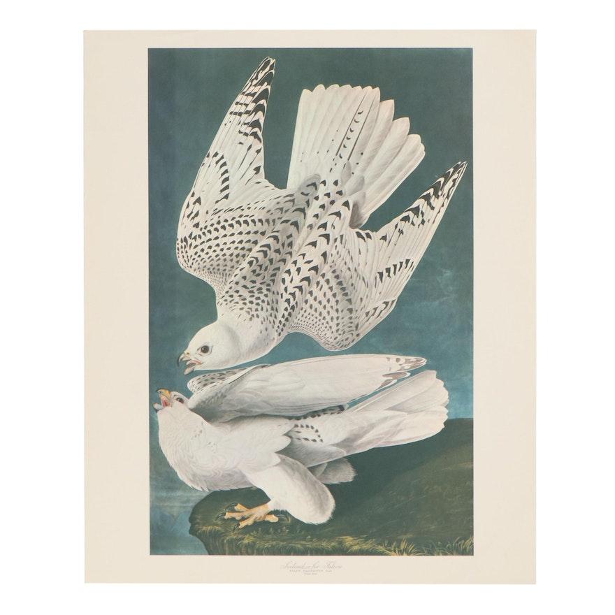 "Offset Lithograph After John James Audubon ""The White Gyrfalcons"""