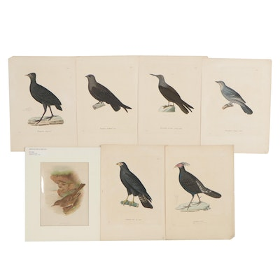Hand-Colored Engravings and Chromolithograph of Bird Species