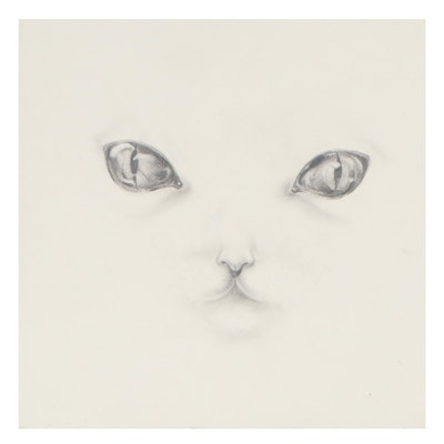 Diego Singh Graphite Drawing of Cat, 21st Century