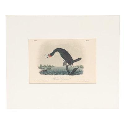 "John T. Bowen Hand-Colored Lithograph ""Florida Cormorant,"" 19th Century"