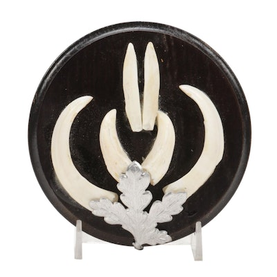 Mounted Stabilized Boar Tusk Display on Wooden Wall Plaque