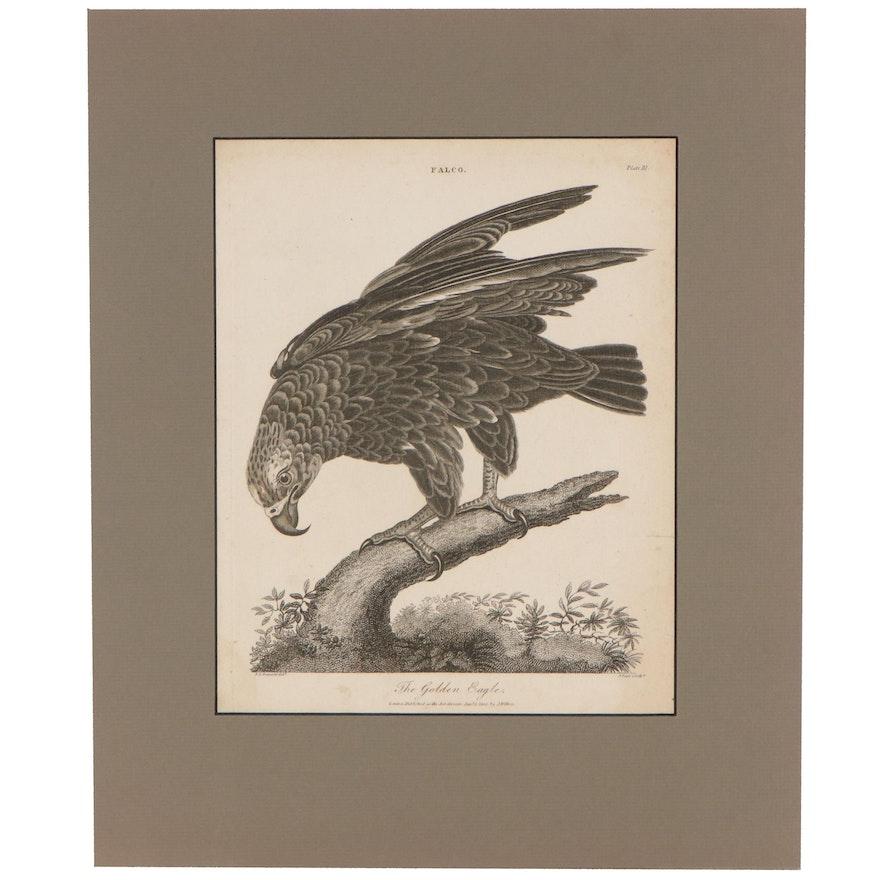 """John Pass Engraving """"The Golden Eagle,"""" 1805"""