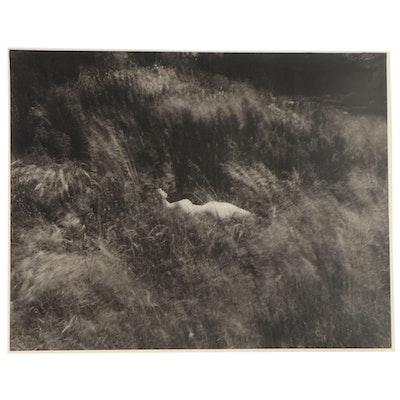 Don Jim Silver Gelatin Photograph of Female Nude in Grassy Landscape, Circa 1970