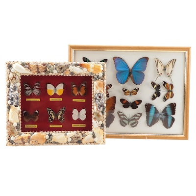 Mounted Butterfly and Moth Specimens in Convex Glass Display and Shadowbox