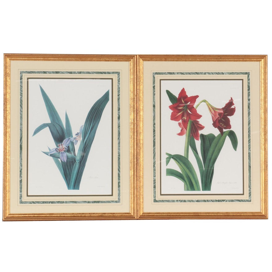 Offset Lithographs of Botanical Species, Late 20th Century