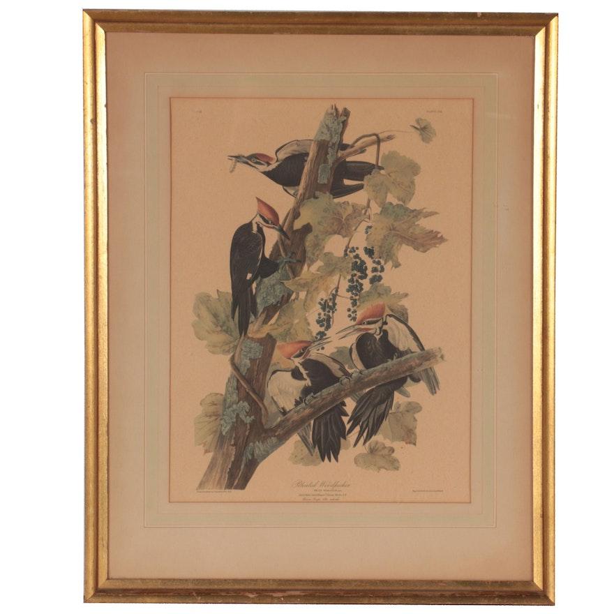 """Offset Lithograph After John James Audubon """"Pileated Woodpecker"""""""