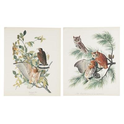 Birds of Prey Offset Lithographs After John James Audubon, 1964