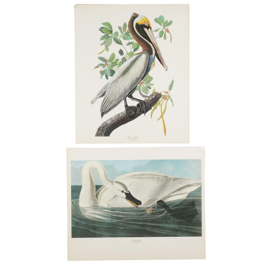 """Offset Lithographs After J. J. Audubon """"Brown Pelican"""" and """"Trumpeter Swan"""""""