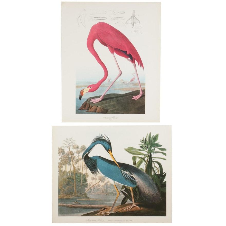 "Offset Lithographs After J. J. Audubon ""American Flamingo"" and ""Louisiana Heron"""