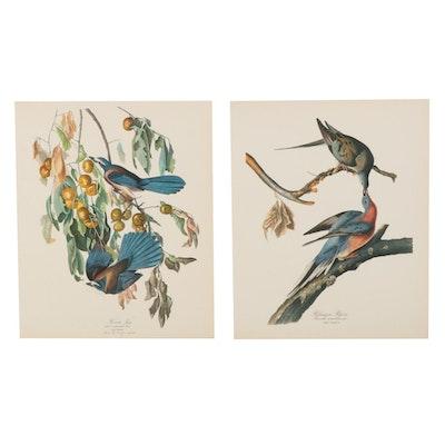 Wildlife Offset Lithographs After John James Audubon, 1964