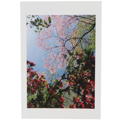 Patrick J. McArdle Digital Photograph of Blooming Trees, 2021