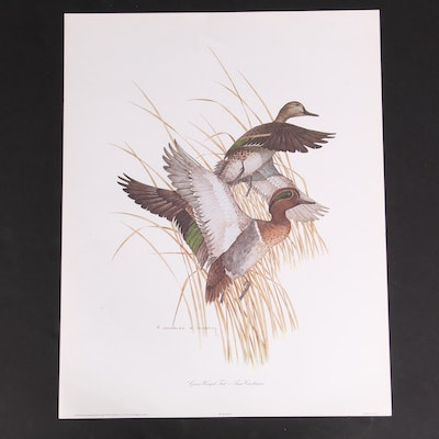 """Offset Lithograph After Charles E. Murphy """"Green-Winged Teal - Anas Carolinesis"""""""
