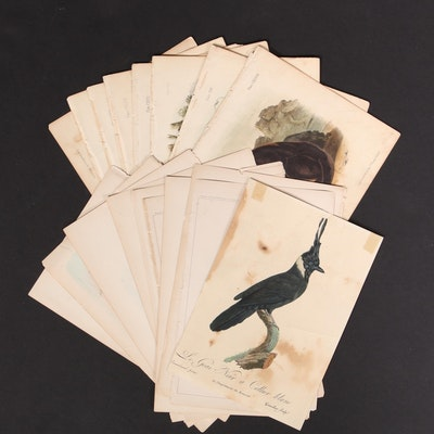 Chromolithographs, Color Lithographs and Offset Lithographs of Bird Species
