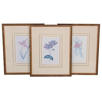 Offset Lithographs after Samuel Holden of Botanical Illustrations