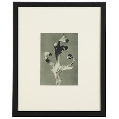 "Karl Blossfeldt Botanical Photogravure ""Compass Plant,"" 1936"
