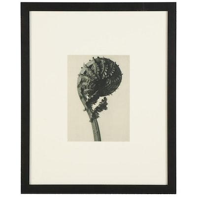 """Karl Blossfeldt Botanical Photogravure """"Fern,"""" 1936"""