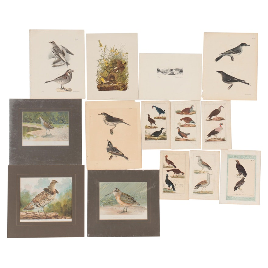 Ornithological Engravings, Lithographs, and Offset Lithograph