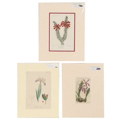 Botanical Etchings and Lithograph, Late 18th to Late 19th Century
