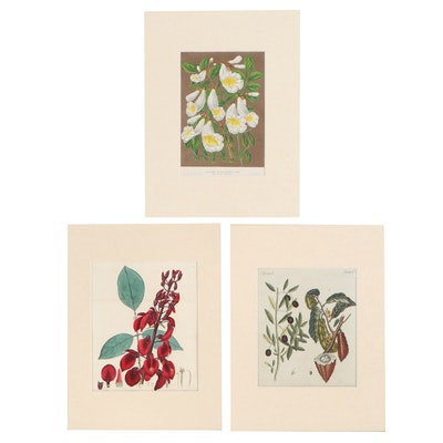 Botanical Etchings and Lithograph, 19th Century