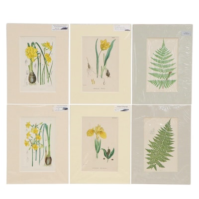 F.W. Burbridge and Other Botanical Lithographs, 19th Century