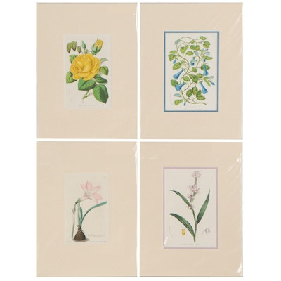 Botanical Etching and Louis Van Houtte Botanical Lithographs, Mid-19th Century