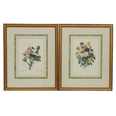 Botanical Offset Lithographs After Pierre-Joseph Redouté