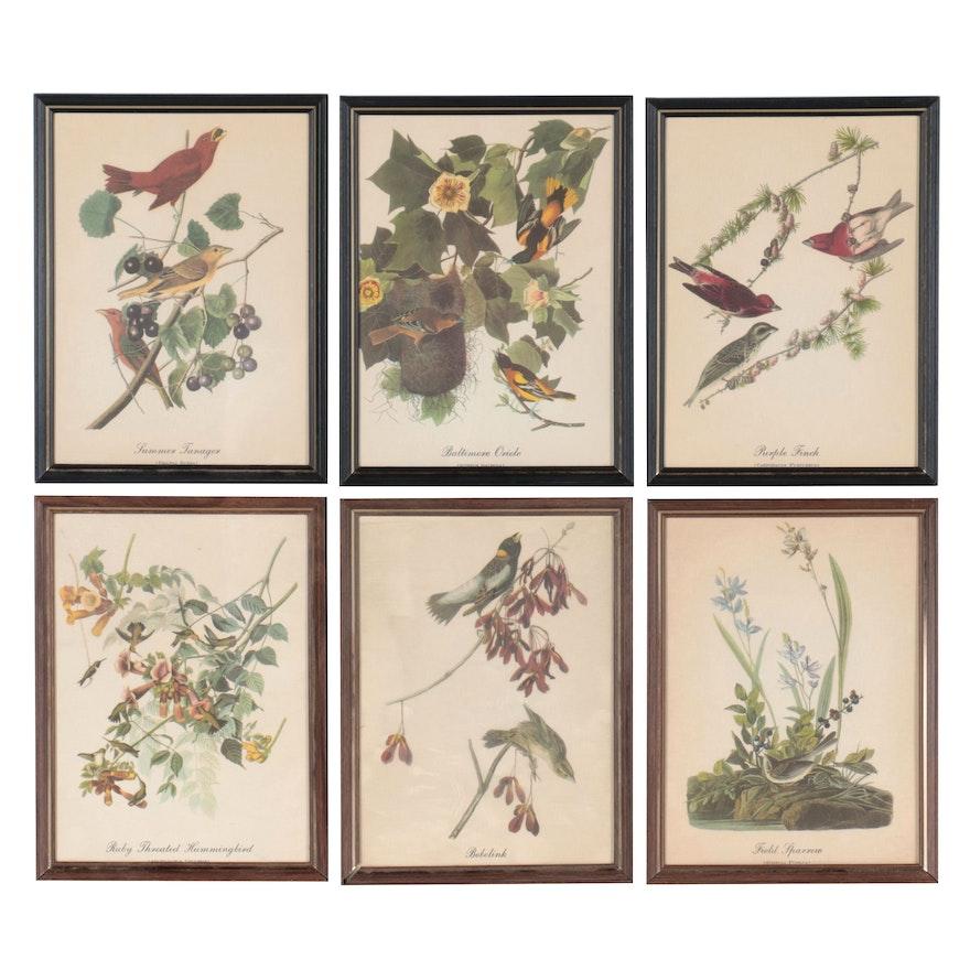 Offset Lithographs After John James Audubon of Bird Species, Late 20th Century