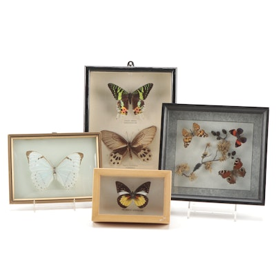 Mounted Butterfly, Sunset Moth, and Beetle Specimens in Wood Shadow Box Displays
