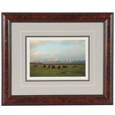 Thomas D. Mangelsen Landscape Giclée of Bison, 2001