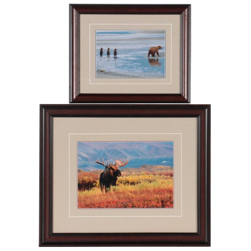 Thomas D. Mangelsen Wildlife Giclées of Bear and Moose