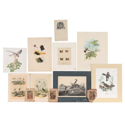Wildlife Lithographs, Etchings and More