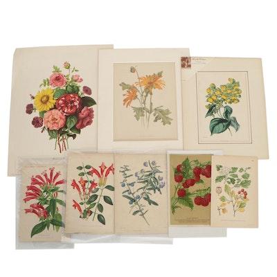 Botanical Lithographs, Circa 1900