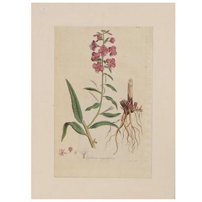 "Francis Sansom Botanical Engraving ""Epilebium Augustifolium,"" Late 18th Century"