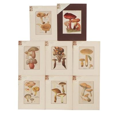 Mushrooms Chromolithographs after Jean Baptiste Bulliard, Late 19th Century