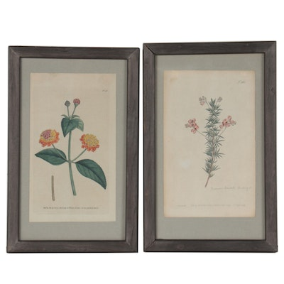 William Curtis Hand-Colored Botanical Engravings