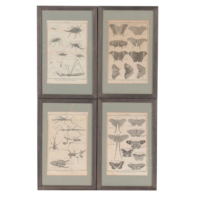 """Robert Bénard Engravings From """"Histoire Naturelle, Insectes"""""""