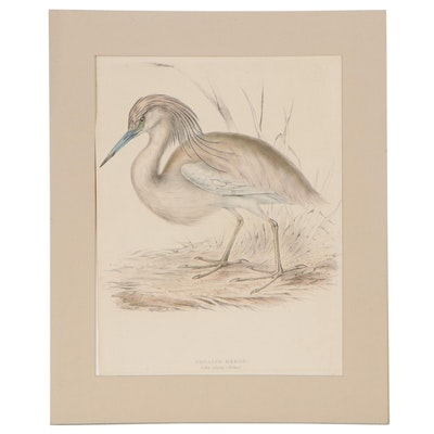 """Hand-Colored Lithograph After John Gould """"Squacco Heron"""""""