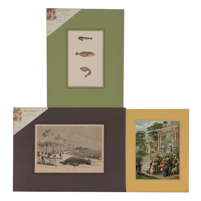 Science and Genre Scene Wood Engravings and Chromolithograph