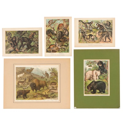 Chromolithographs From Johnson's Household Book of Nature, Circa 1880