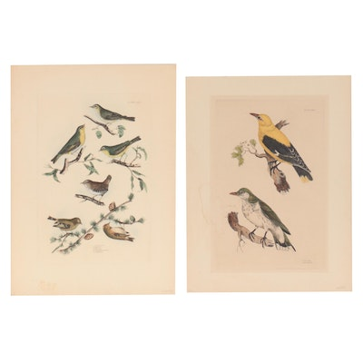 Prideaux John Selby Hand-Colored Engravings of Bird Species, Mid-19th Century