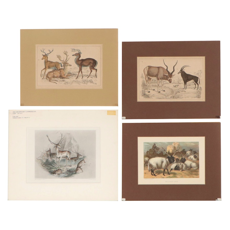 Hand-Colored Lithographs of Horned Animals, Late 19th-Mid 20th Century