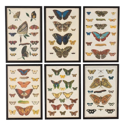 Offset Lithographs of Butterflies and Moths, Late 20th Century