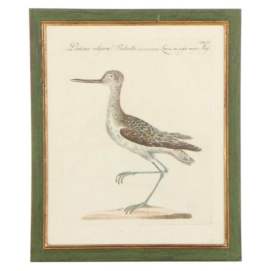 Hand-Color Engraving After Saverio Manetti of Bird Illustration