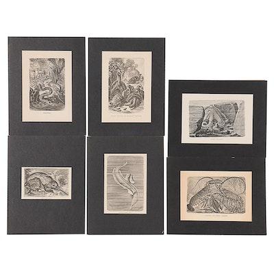 Wood Engravings of Species, Late 19th Century